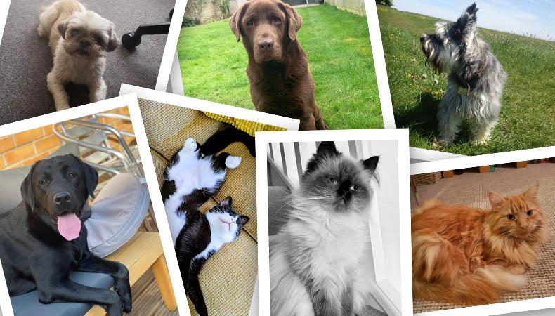 Meet the Incentivesmart pets!